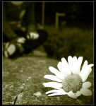 - My Daisy - by Grigari