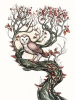 Barn Owl by Evanira