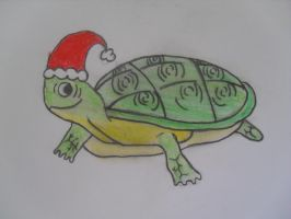 Christmas Turtle by Coocoosim