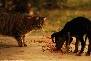 Why are you eating cat food? by VoldroY