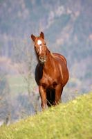 Heroic Horse 10356489 by StockProject1