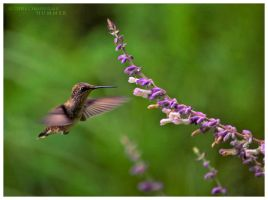 Hummer by FasterThanChris