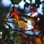 Changing Leaves by incolor16