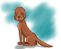 Goldendoodle by Panda-Prune