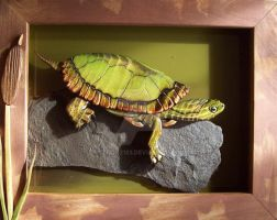 Red-eared slider by python2123