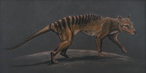 Thylacine 2 by afestything
