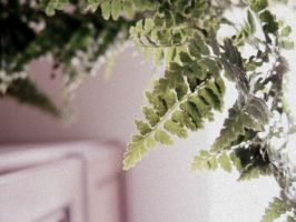 in my mother's house: polypody by snusmumrikenn