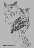 Eurasain Eagle Owl Sketch by Deorse