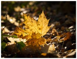 Golden October by Vampirbiene