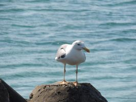 lonely sea gull by exit-humanity