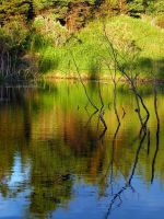 Beaver pond 3 by LucieG-Stock