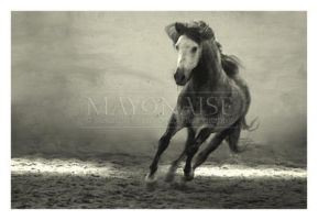 Horse - 17 by mayonaise1980