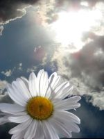 Daisy in the sky by SimplyBackgrounds