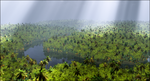 Rain Forest by jbjdesigns