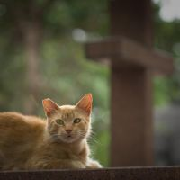 cemetery cat 2 by poivre