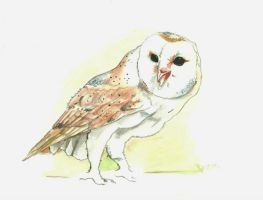 Owl Watercolor by beorange