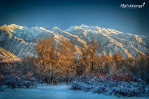 Winter Glow on the Trees HDR by mjohanson