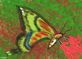 Butterfly v886 by lv888