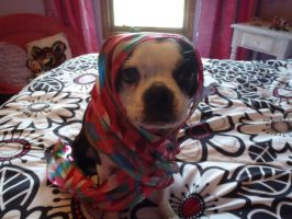 my puppy wrapped by Endeavor4ever