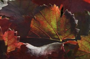 Leaves by Mishall