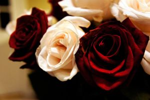 Red And White Roses II by LDFranklin