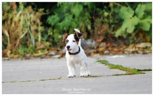 JRT - Dixie by dbist