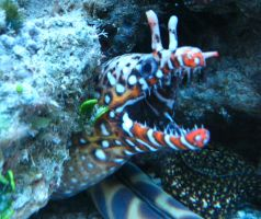 Dragon Moray Eel by sapphiresphinx