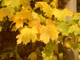 gold leafs by AriaGrill