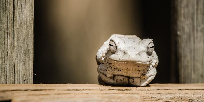 The Smiling Froggy by AnneMarks