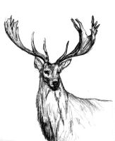 Stag by Counterdraw