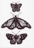 Three Butterflies by BeckyHolly
