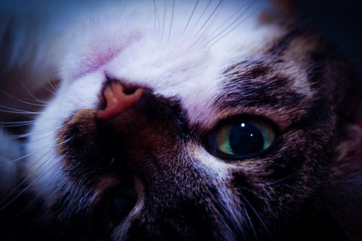 Cat III by 66Lilith66