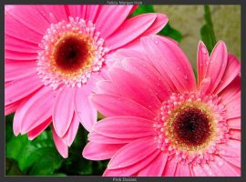 Pink Daisies by Bitter-Sweet-Lullaby