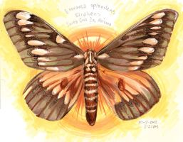 20121002: Moth Study by AngelicRoyalty