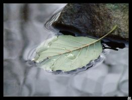 A leaf on the water line by buttleane