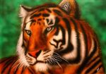 20150205 Tiger by MixaArt