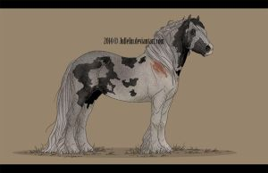 Gypsy Vanner Auction #7 ENDED by Jullelin