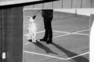 Treibball I by LDFranklin