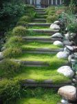 mossy steps by Da-Jelly-Fish