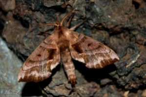 Moth by MiaLeePhotography