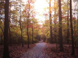 Autumn Walkway by Stacey1mb
