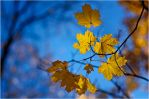 Autumn 2011... _12 by my-shots
