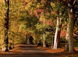 Viale di Autunno by DundeePhotographics