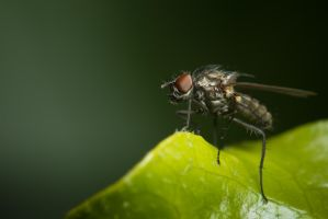 The Fly by gmwebs