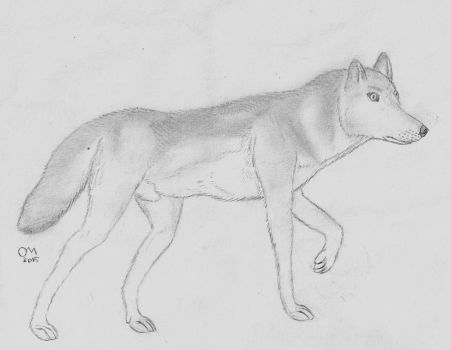 Grey Wolf 'Canis Lupus.Sp' by Penguinking231