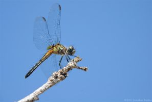Dragonfly: 8D by JonShotFirst