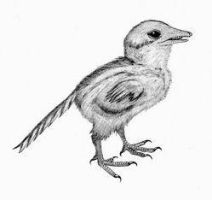 Archaeopteryx chick by briankroesch
