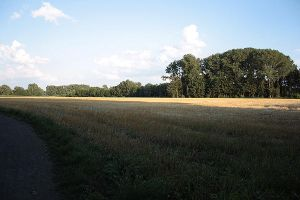 Fields in Muenster by Avalarion