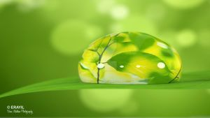Water drop on a leaf 1920x1080 by vinumathew