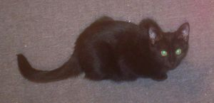 One of the two kittens by Nova225